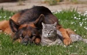 suns-ir-kates-draugyste