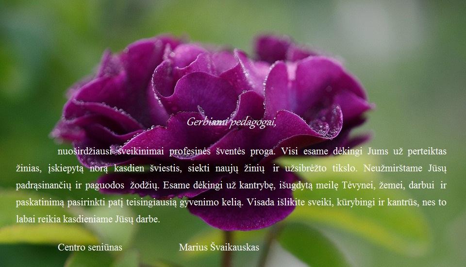 rose-144122_960_720