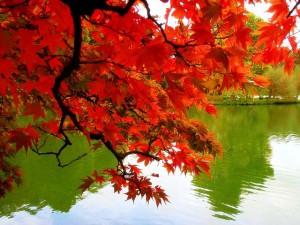 Raudoni rudens lapai